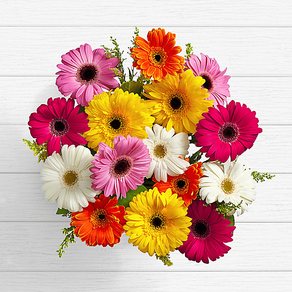Birthday Lovely Gerbera Daisies Send Flowers Pakistan